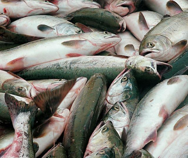 Гельминтозы рыб