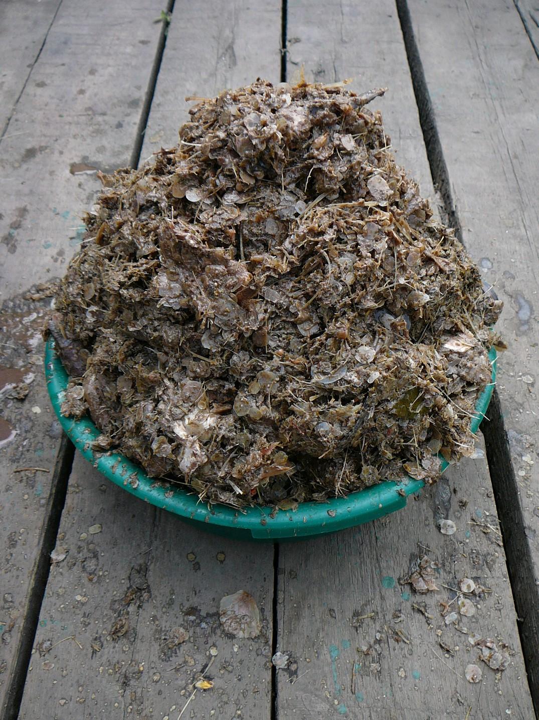 Вот столько получилось твердых отходов (головы, кости, чешуя) после отцеживания через железное сито фляги базового гарума
